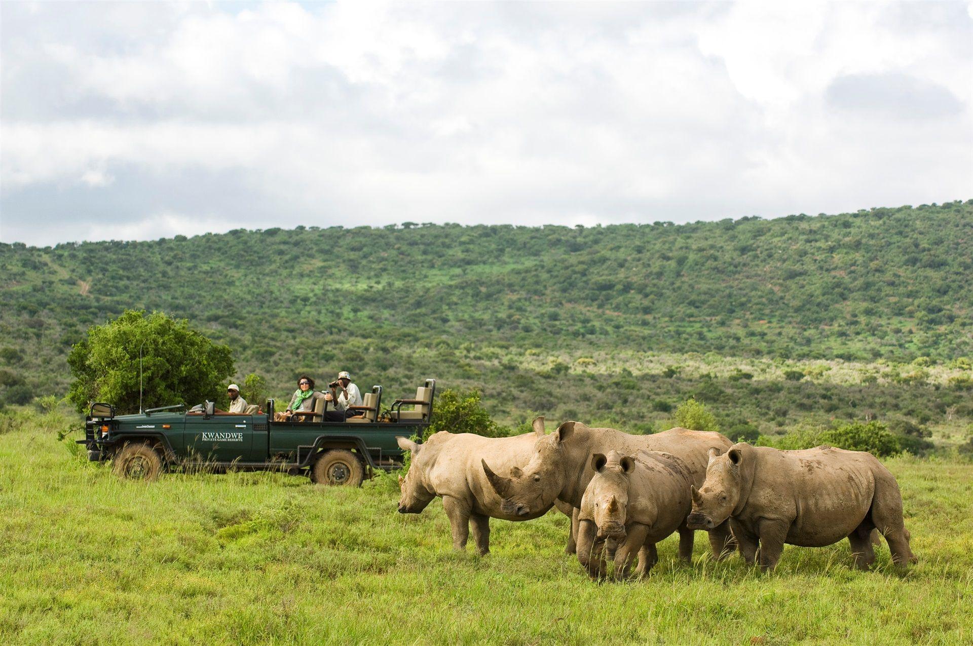 Kwandwe Rhino Safari