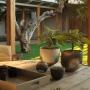 Morukuru Lodge