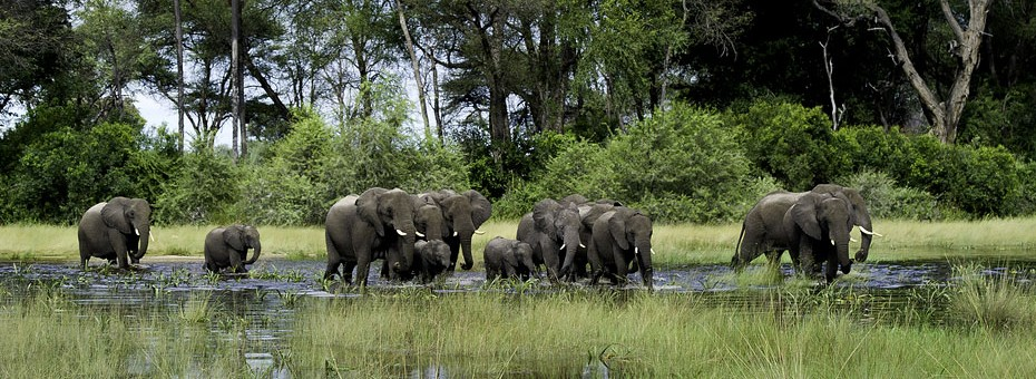 Explore the Okavango